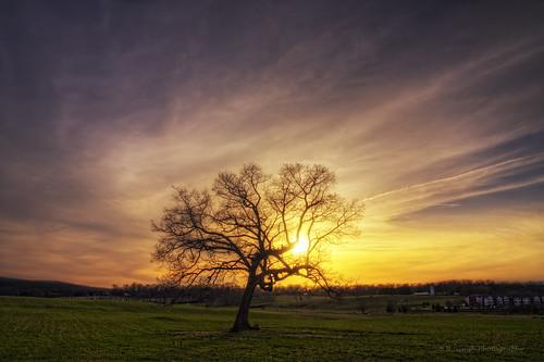 sunset sun tree virginia flickr hdr blacksburg photomatix canoneosrebelxsi bbsinghphotography