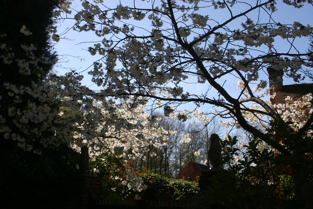 Blossom above