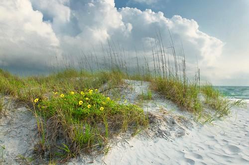 flowers storm beach clouds landscape sand afternoon florida path fineart footprints april polarizer johnspass seaoats thunderhead madeirabeach colorefexpro floridalandscape floridaphotographer niksoftware floridaphotography andrewvernon nikond300s aperture3