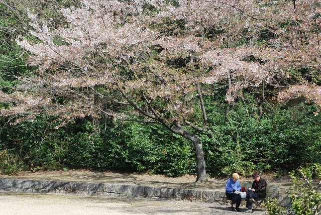 A couple enjoys hanami in Heiwa Koen in Nagoya-shi, Japan. Photo by Keight Beaven. All rights reserved.