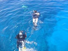 ハワイ島でダイビング