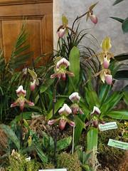 Exposition d'orchidées à la Fondation Eugène Napoléon