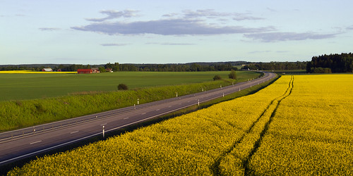 road field countryside sweden oil sverige agriculture raps rapeseed östergötland canonefs1785mmf456isusm canoneos7d gettyimagesswedenq2