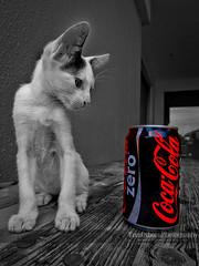 Fri, 16/07/2010 - 14:59 - Street Cat - Philippines