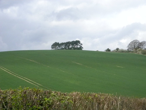 Clump on a hill