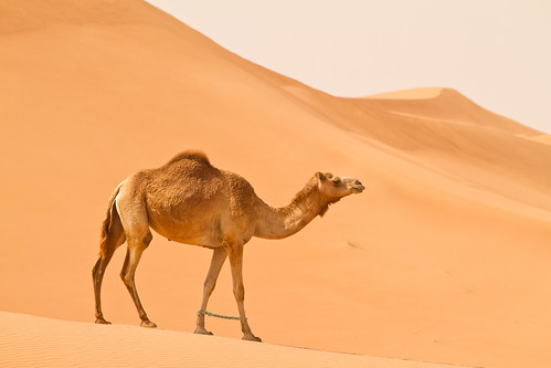 travel blue red sky orange yellow sand dubai desert uae camel margham canonef70200mmf28lisiiusm