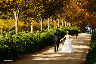 so what does the average destination wedding cost