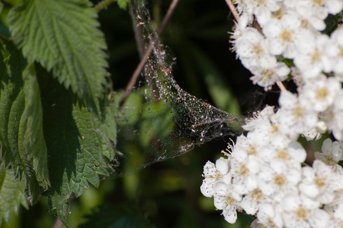 Web catching pollen