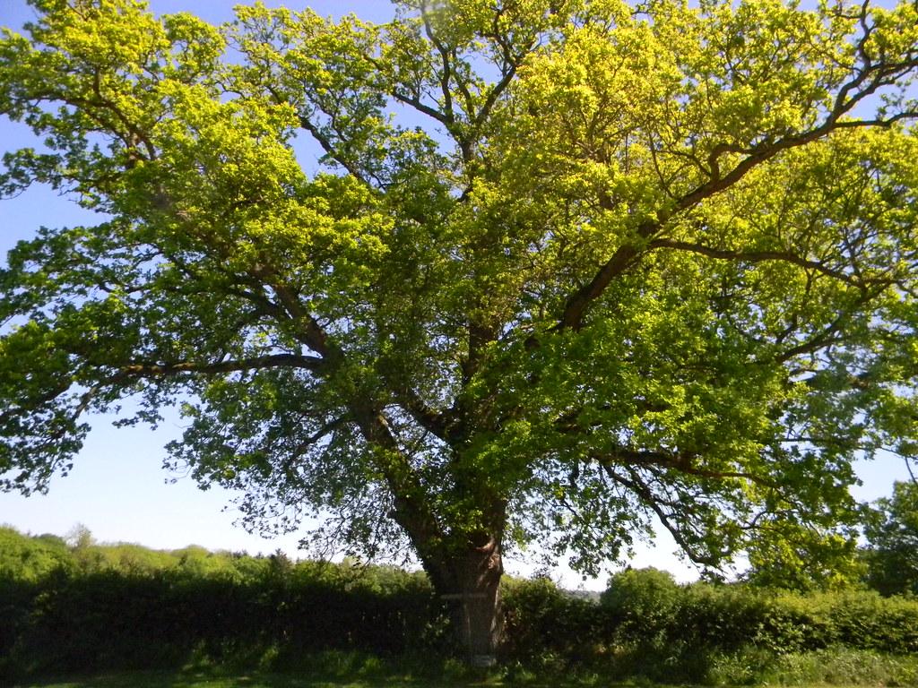 Tree Ockley to Warnham