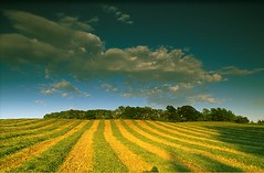 empirestatefuture posted a photo:	Photo: American Farmland Trust