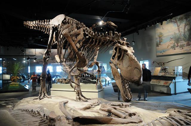 Dinosaur Hall Chicago Field Museum Flickr Photo Sharing