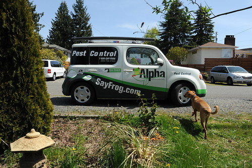 Rosie checks out the Alpha SayFrog.com Pest Control trucklet, Broadview, Seattle, Washington, USA