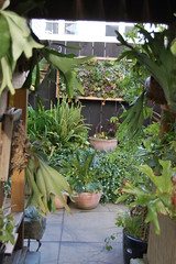 Staghorn Fern Grotto