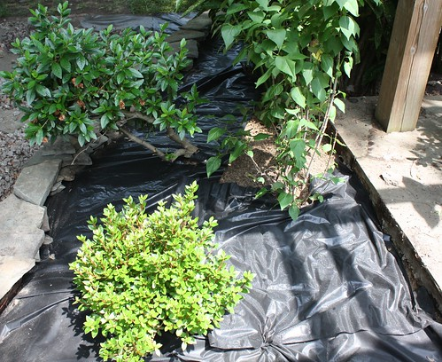 Landscaping Without Weed Barrier : Garden landscape the lovely plants