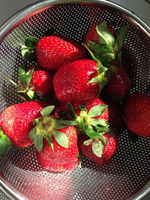 Strawberry season begins