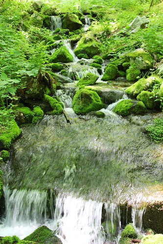 statepark creek moss pennsylvania blueknob beaverdamcreek mountainviewtrail