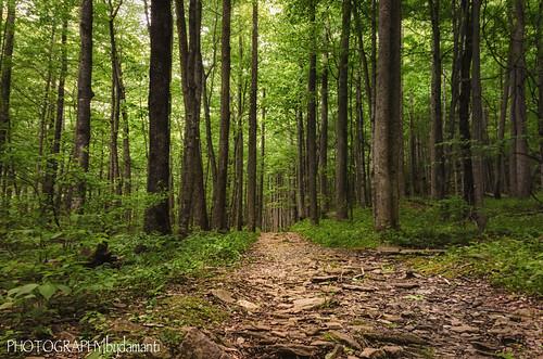 trees virginia unitedstates trails floyd rockcastlecreektrail