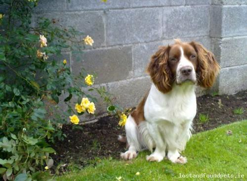 dog lost view may kildare 2014 caragh lostdogcaraghviewkildare