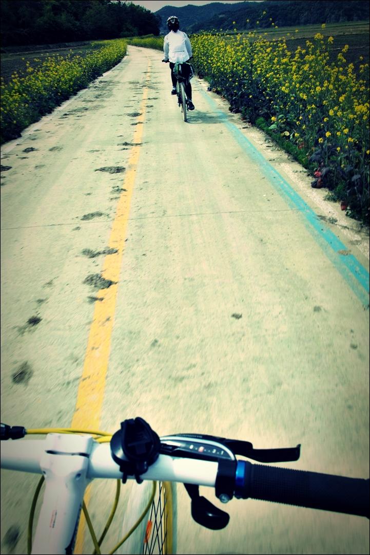 나주 유채꽃-'영산강 자전거 종주 Yeongsan_River_Bike_Riding'