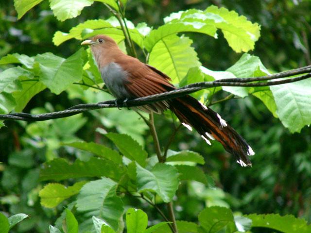 strange-new-bird