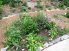 Kitchen Herb Garden-Weaverville
