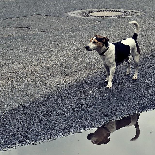 tierisch reflektiert