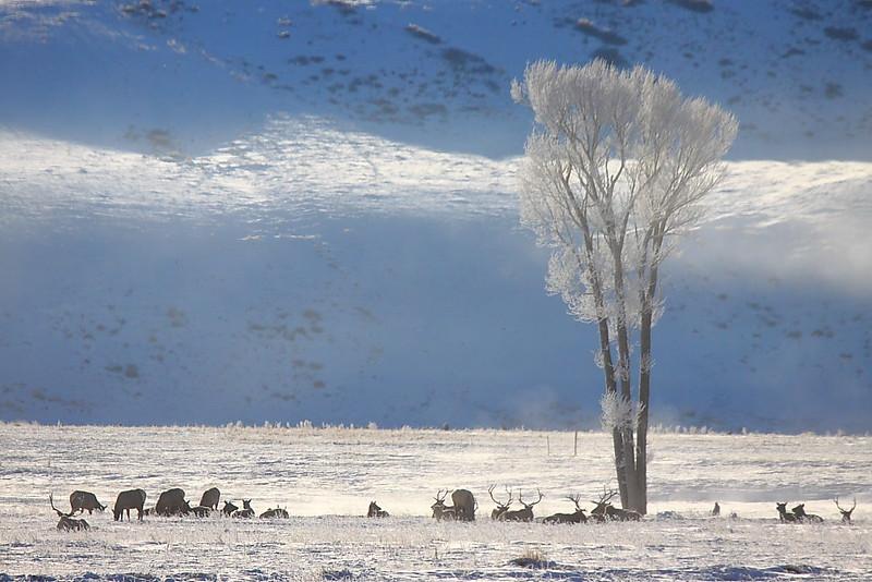 IMG_0116 Winter Morning, National Elk Refuge