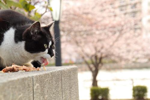 花より団子猫1