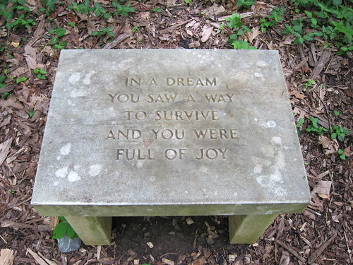 dream joy