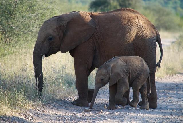 Elephant Walk definiti...