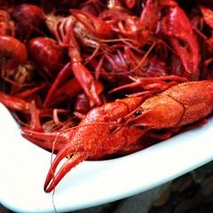 animal(0.0), crab boil(0.0), seafood boil(0.0), crayfish(0.0), fish(0.0), dungeness crab(0.0), homarus(0.0), american lobster(0.0), lobster(1.0), crustacean(1.0), seafood(1.0), food(1.0),