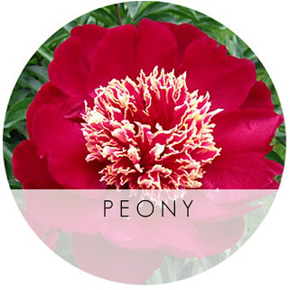 peony_6_1_09_b