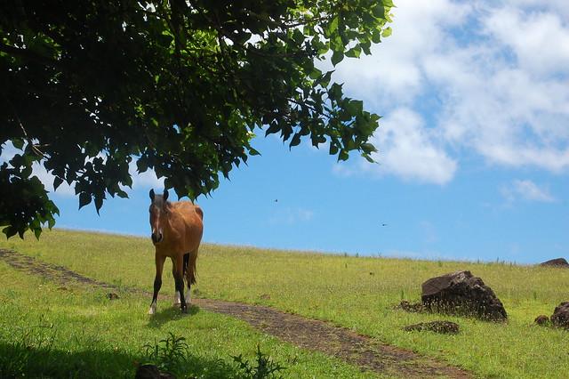 Horse at Puna Pau