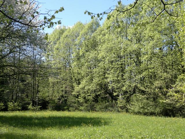 Parco San Lazzaro (2)