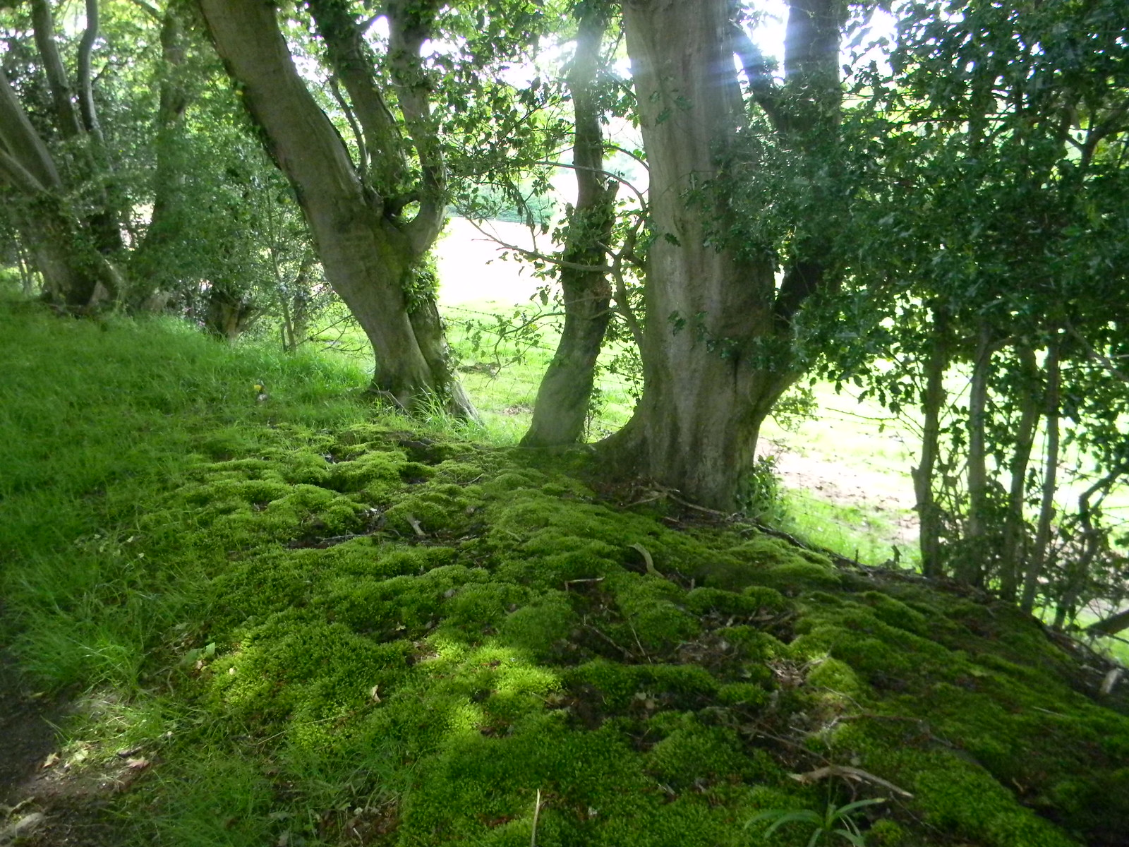 Moss and trees Robertbridge (short) Circular