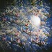 Torbellino de flores by Rubo Stars & Lore Stars