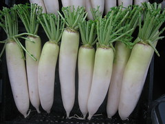 plant stem(0.0), vegetable(1.0), produce(1.0), food(1.0), daikon(1.0), radish(1.0),