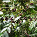 Coffee_Puerto_Angel_to_Oaxaca_City_Mexico_2004_12_23_065.jpg por maholyoak