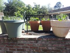 Reveling In My April Easter Garden 5