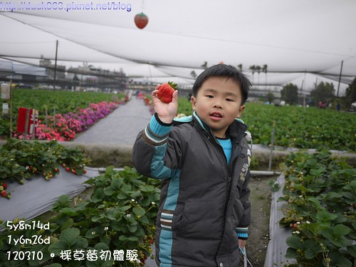 P1180082莓