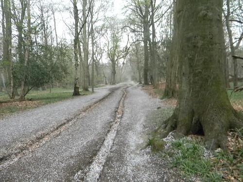 Hailstorm in Ashridge