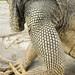 Iguana armour