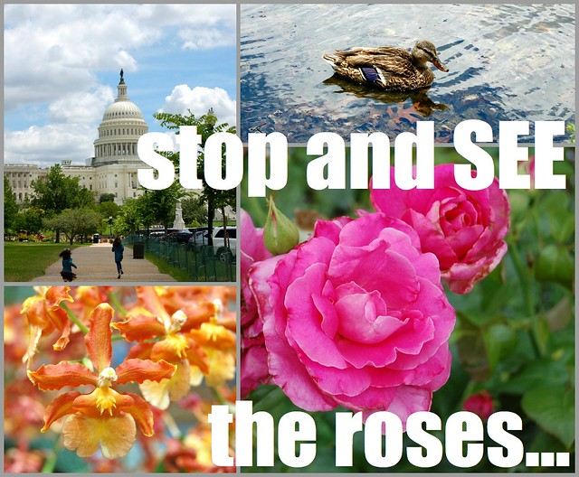 See the Roses Collage