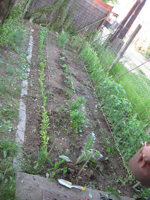 garden May 8, 2014