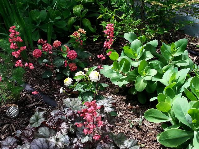 sally-garden4