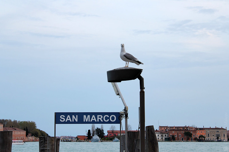 Venice. Венеция.