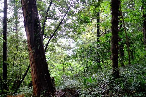 綱島市民の森