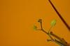 107/366: Brotes de orquídea