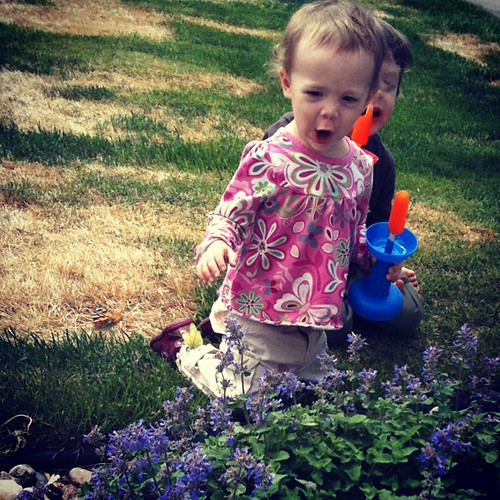 May 4. She found a bush full of flyflies! (butterflies)
