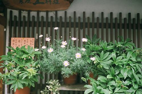 yashica-electro35-fuji100-24-0426-015